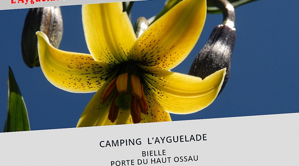 intro camping ayguelade